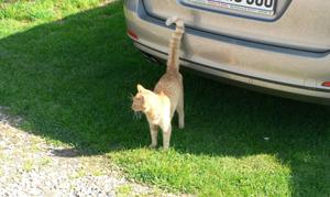 onzindelijke_kat